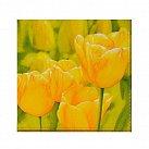 Serwetka na Wielkanoc Tulipany